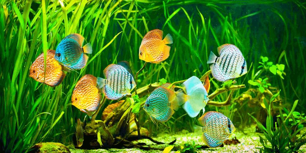 akvarijum cena urdjenja za diskuse