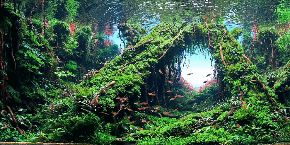 akvarijumi cene aquascape