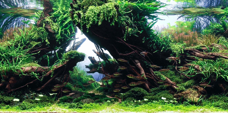 Besprekorno čist akvarijum bez algi