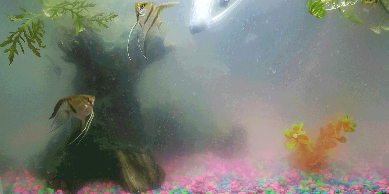 mlecna voda u akvarijumu