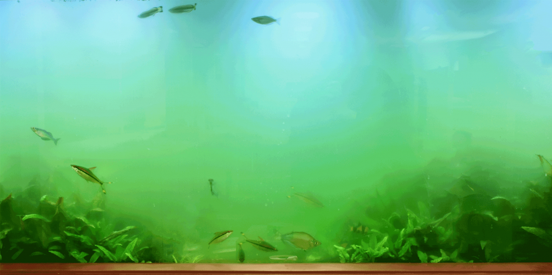 zelena voda alge u akvarijumu